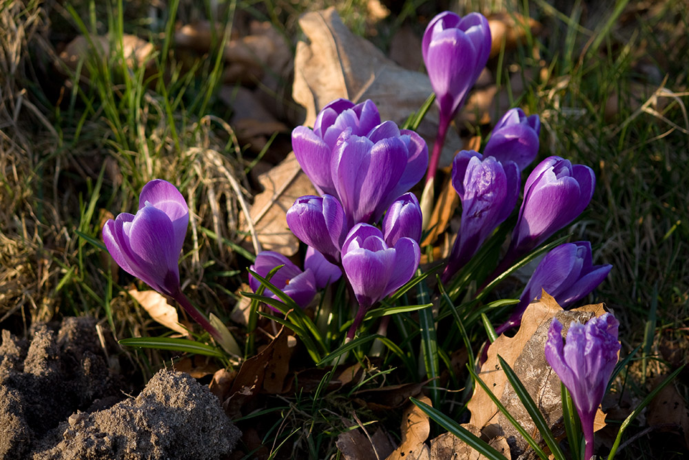 IMAGE: http://www.wilddemo.dk/potn/2009_03_17_IMG_01606_1000px.jpg